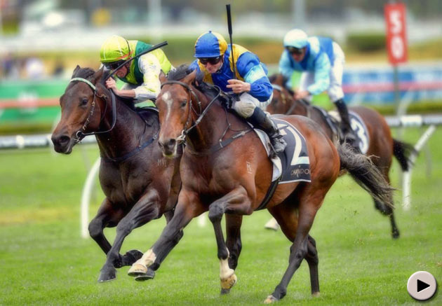 It's a Dundeel - Spring Champion Stakes