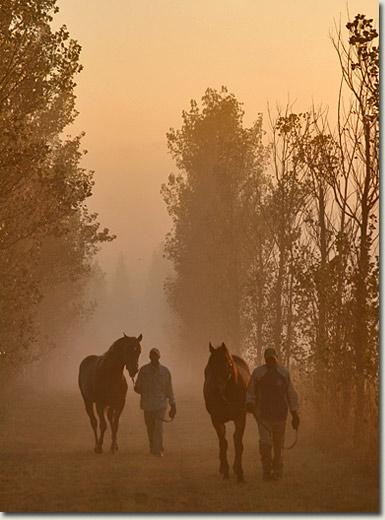 a misty morning at summerhill stud