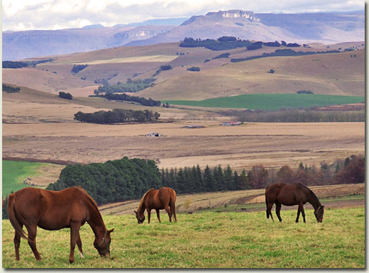 summerhill stud giants castle