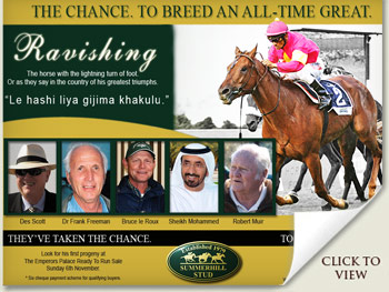 Ravishing Ready To Run Sale 2011