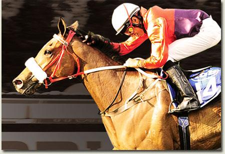igugu race horse trained by mike de kock