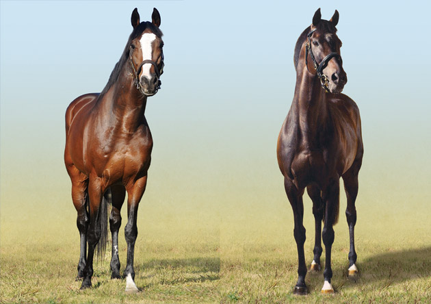 Golden Sword and High Chaparral