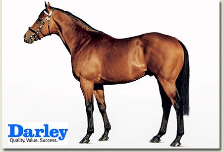 dubawi stallion