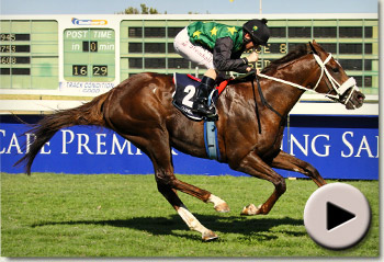 Variety Club wins the Cape Premier Yearling Sale Guineas