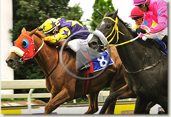 spiced gold and hear to win sa fillies classic 2010 video