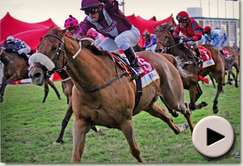 In Writing - Ladbrokes Gold Cup