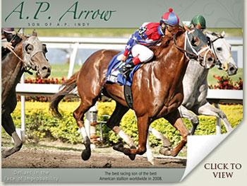 a.p. arrow race horse