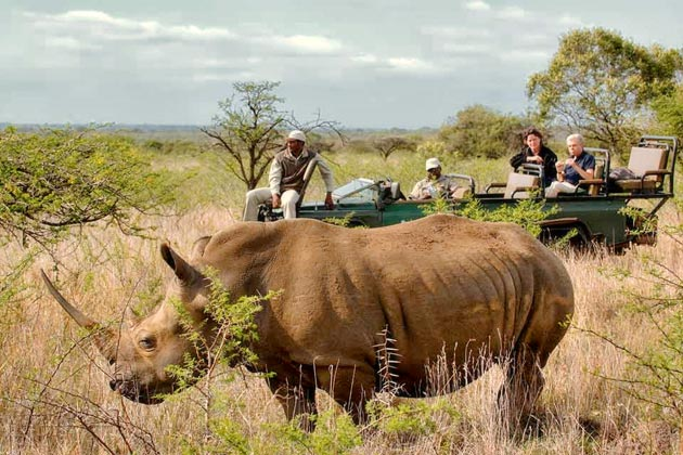 Rhino at Phinda Private Game Reserve