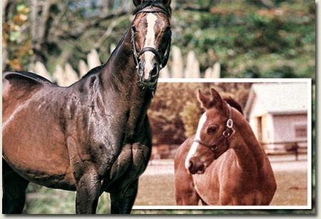 Northern Guest Stallion