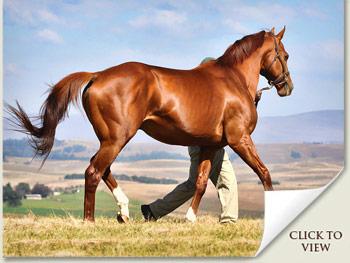 Stallion Admire Main