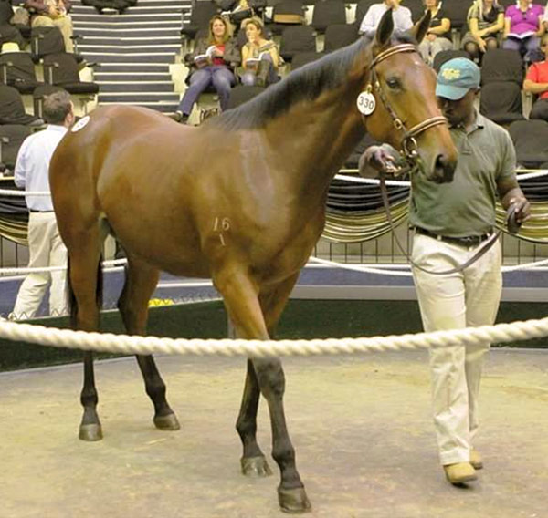 National Yearling Sale Lot 330 Purely Atomic
