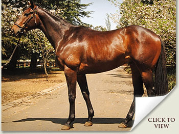 lot 55 frontino gold by hussonet