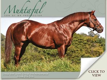 muhtafal stallion