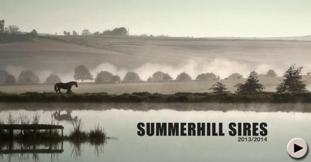 Summerhill Sires 2013 - 2014