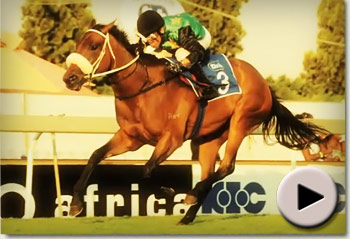 Racehorse Hollywoodboulevard sold by Summerhill Stud