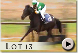 lot 13 mantatise by rock of gibraltar