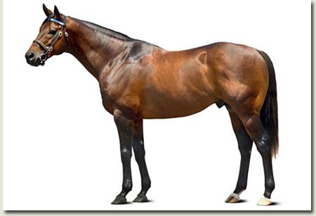Elusive Quality Stallion