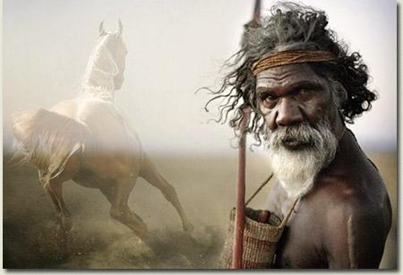 australian race horses for sale