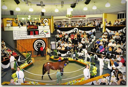 emperors palace national yearling sale