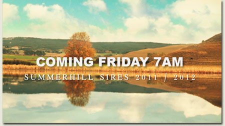 Summerhill Sires Film - Coming Soon
