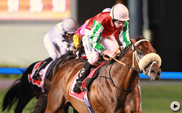 bankable stallion