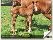 ravishing - wester flash foal
