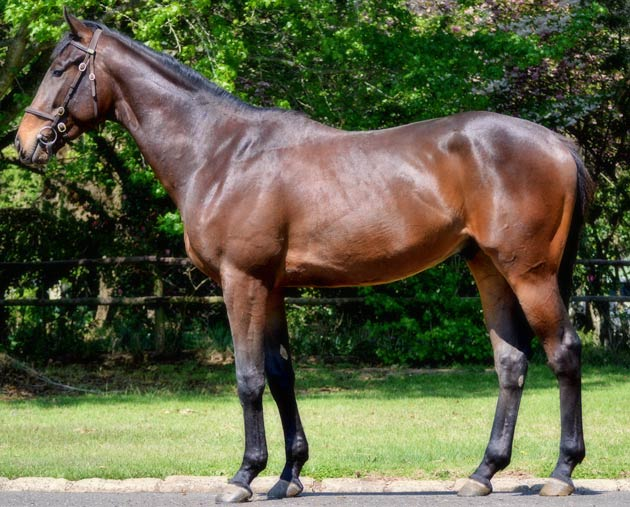 Ready To Run Lot 168 Stronghold - Bouncebackability