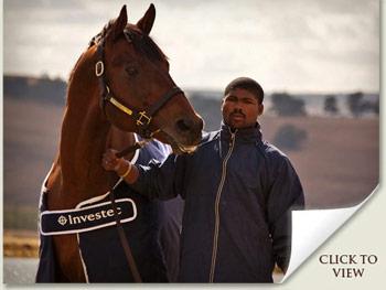 Investec Stallion Day