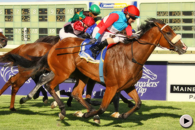 Love Struck - Breeders' Cup Politician Stakes