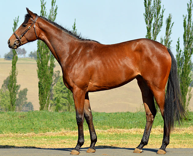 Lot 36: Defining Looks (Trippi x Snooty Lady)