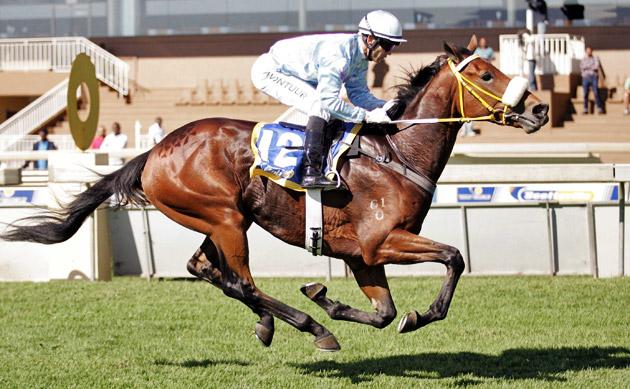 Umgiyo Horse