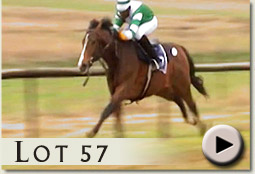 lot 57 estornini by miesque's approval video