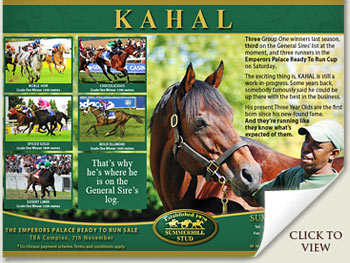 kahal stallion