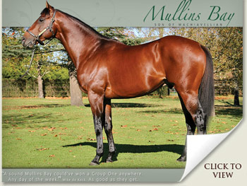 Mullins Bay Emperors Palace National Yearling Sale 2011