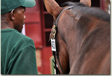 National Yearling Sale 2011