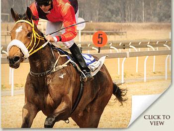igugu racehorse