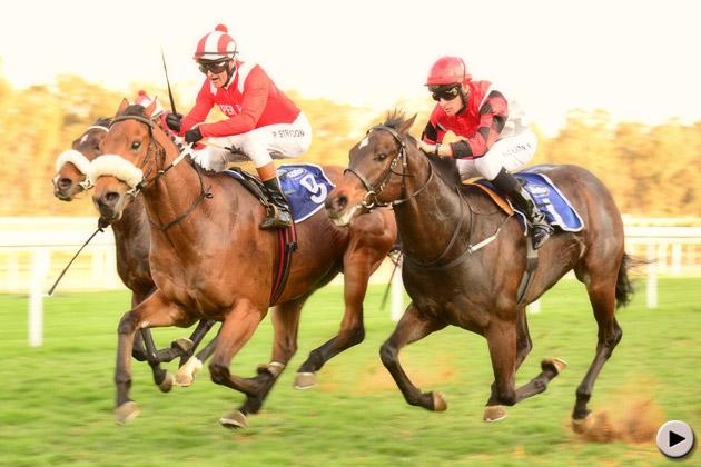 Gambol Horse