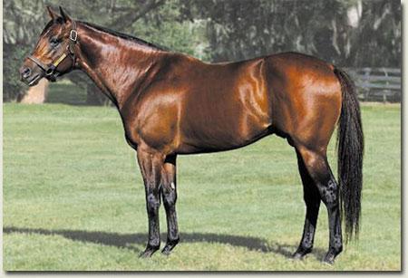 Stallion Trippi