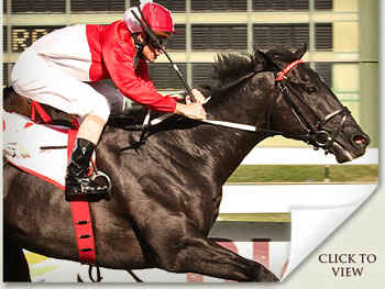solo traveller wins the bloodstock sa cape guineas