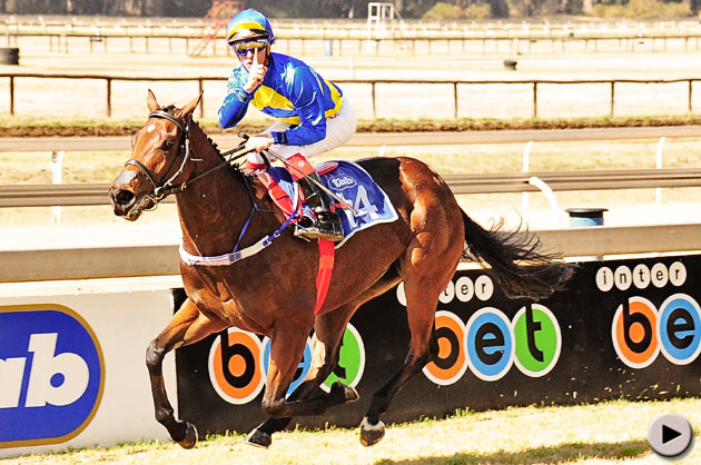 Winter Star Horse