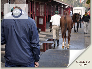 National Yearling Sale 2011 Behind The Scenes
