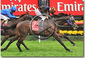 shocking melbourne cup 2009 video