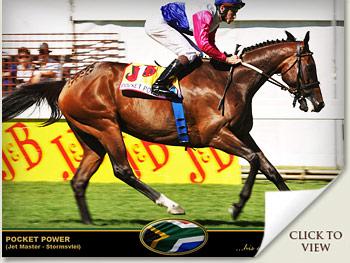 pocket power horse