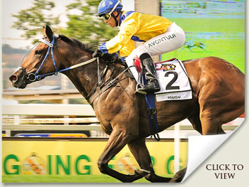 Igugu winner of the Gauteng Fillies Guineas