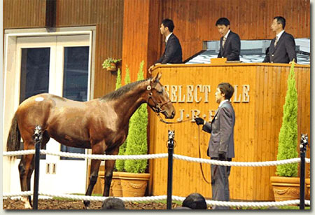 jrha select sale yearling session lot 50 deep impact by isle de france