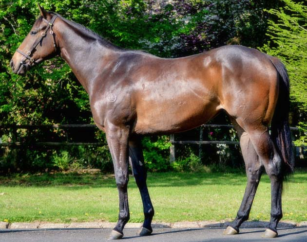 Ready To Run Sale Lot 153 Rock Of Gibraltar - Almighty Sister