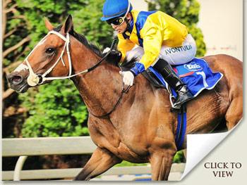 Igugu - Racehorse