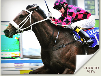 winning leap three year old runner in the 2010 canon gold cup grade 1