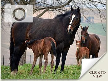Spring Foal Photos