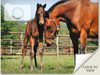christmas mares and foals photos